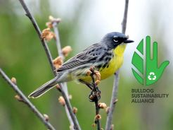 BSA Kirtland Warbler. Image Courtesy of the Bulldog Sustainability Alliance at Ferris State University. https://www.facebook.com/events/822385244584231/