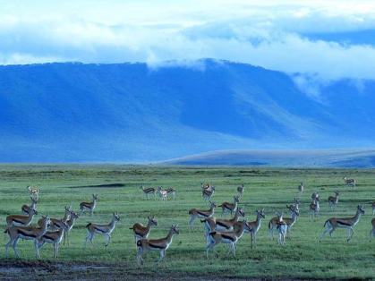 Ngorongoro Crater on the Serengeti. Courtesy of the University of Maine - Farmington's Director of Global Education.